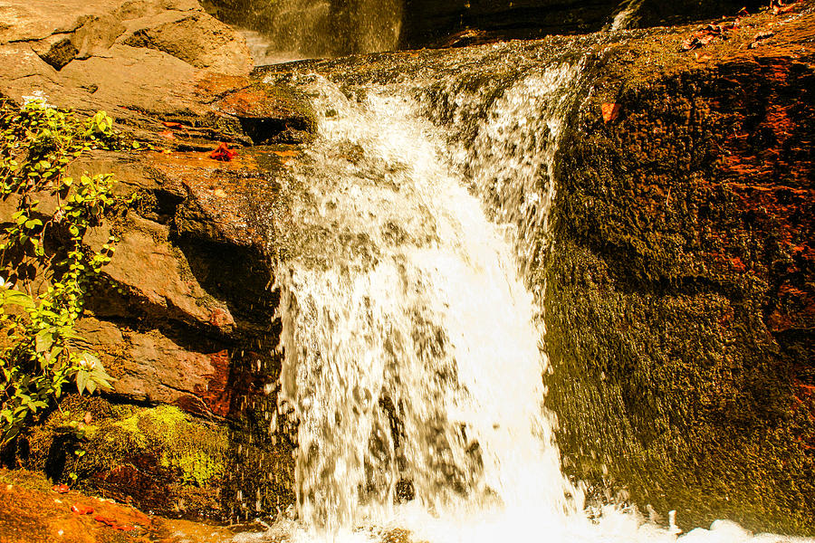 South Carolina Photograph - Little Falls by Tom Zukauskas