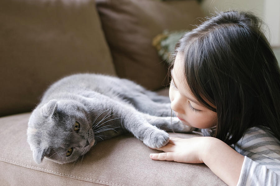 Scottish Fold Cat Photograph - Little Girl Hanging Out With Her Scottish Fold Cat by Bradley Hebdon