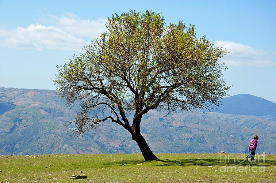 Alpujarras Photograph - Little Girl Walking Past A Tree In Springtime by Sami Sarkis