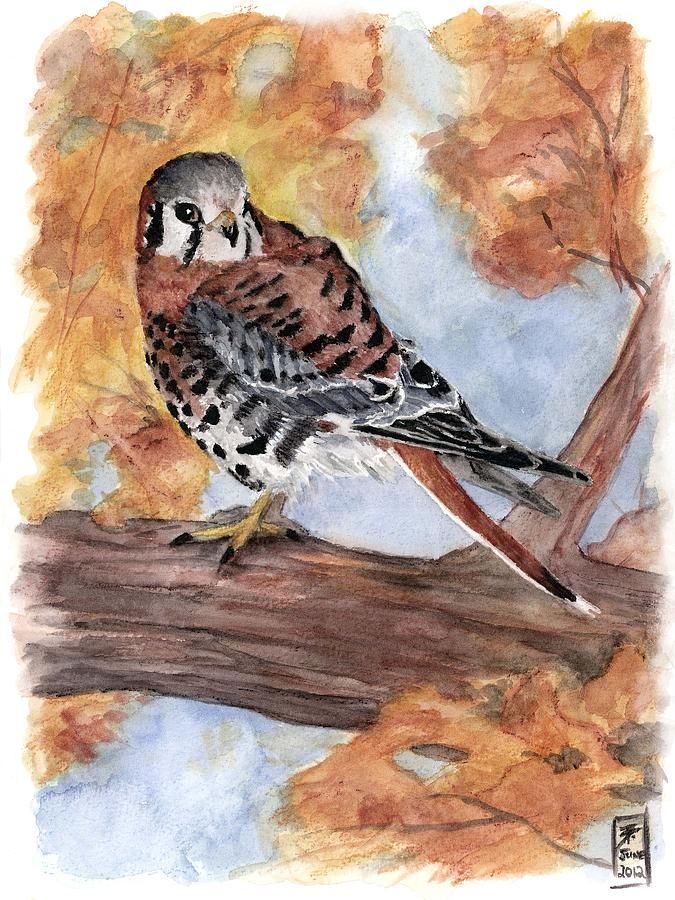 Kestrel Painting - Little Guardian by Brandy Woods