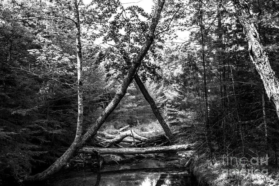 Little Harbor Brook Photograph