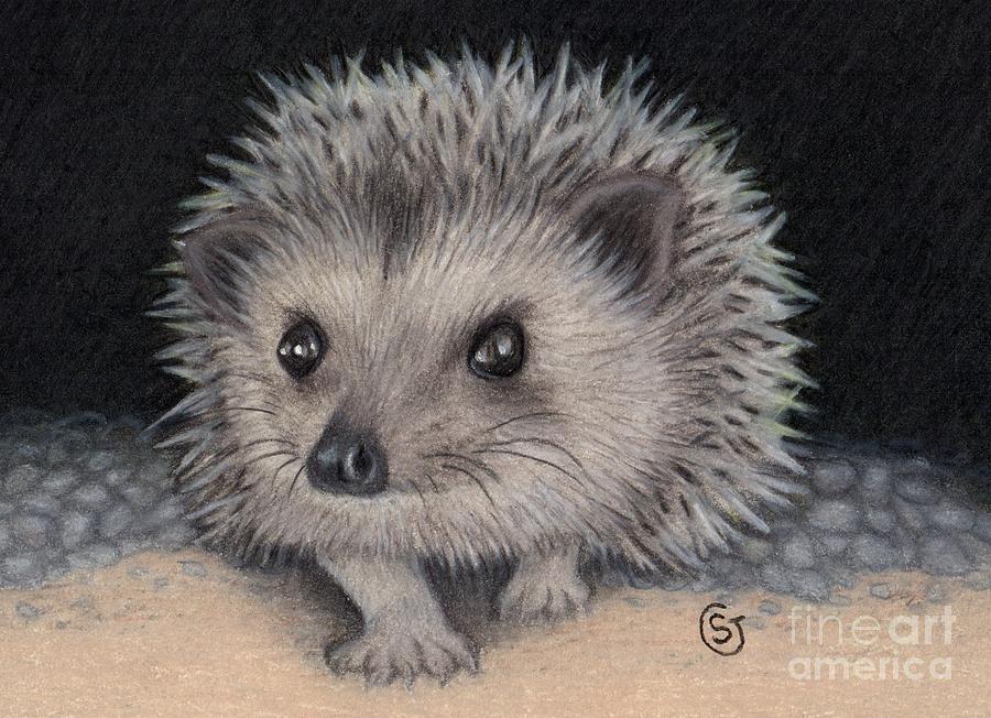 Hedgehog Painting - Little Hedgehog Baby Peeking Out by Sherry Goeben
