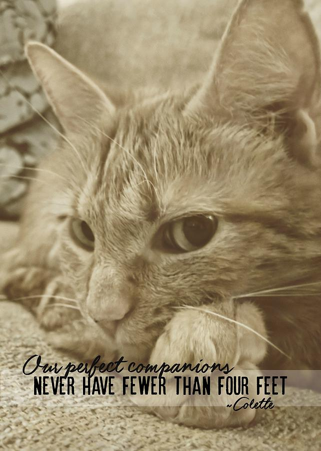 Cat Photograph - Little Lily Quote by JAMART Photography
