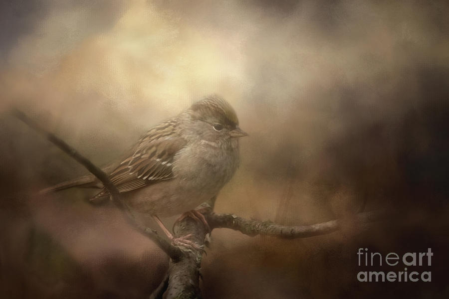 Birds Photograph - Little Lost Bird by Cindy McDonald