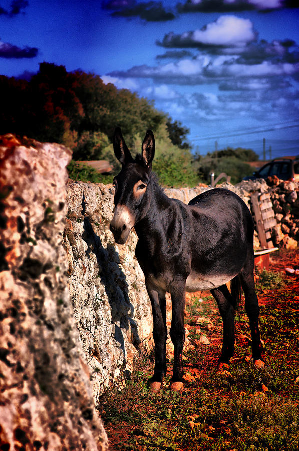 Little Mediterranean Donkey Dream Color With White Eyes And Belly  Hdr By Pedro Cardona Photograph by Pedro Cardona Llambias
