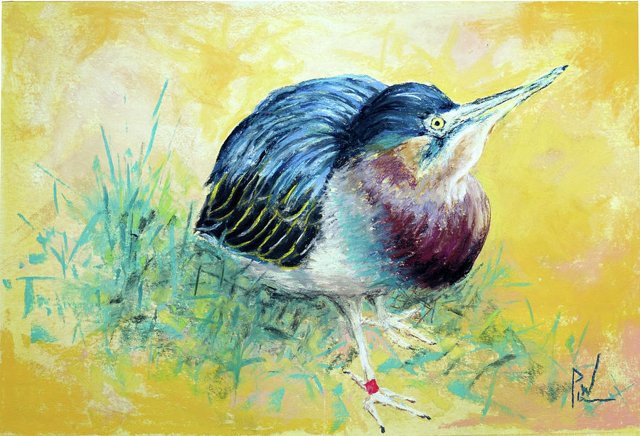 Bird Pastel - Little Night Heron by Philip Lodwick Wilkinson