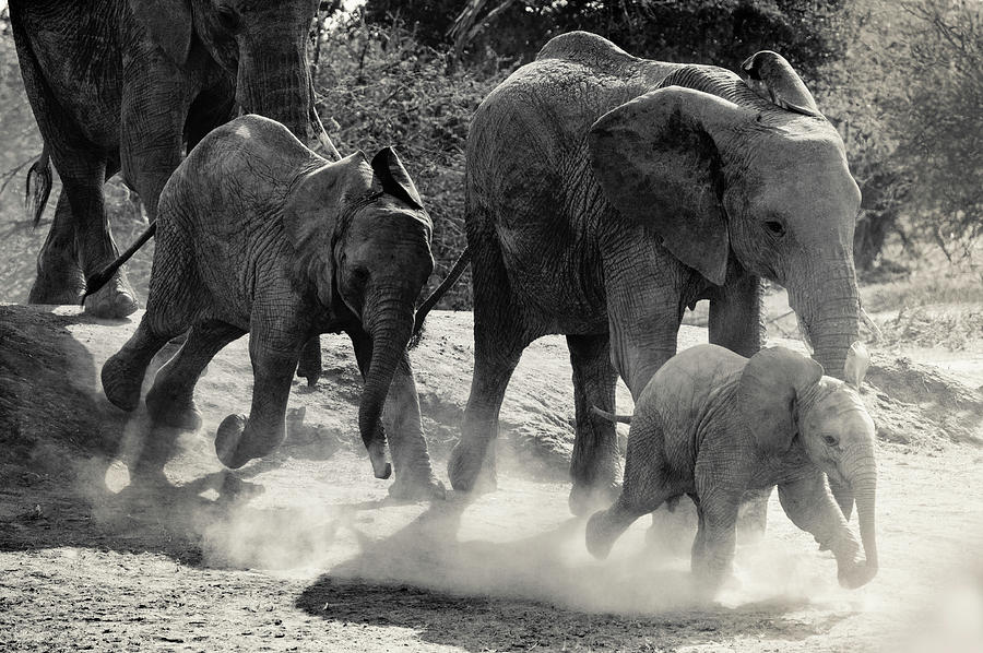Elephant Photograph - Little One Leading The Way by Vicki Jauron