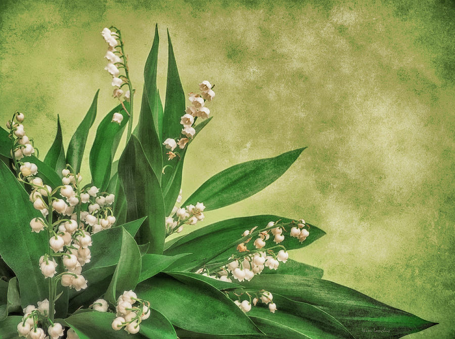 Lily Of The Valley Photograph - Little Poison by Wim Lanclus
