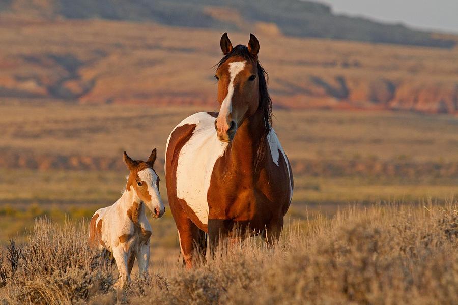 Horses Photograph - Little Prince by Sandy Sisti