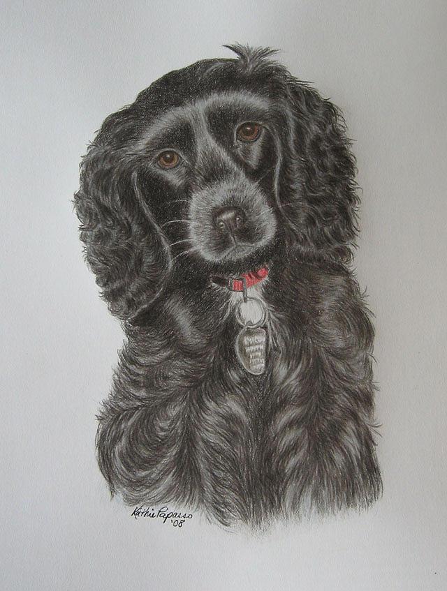 Cocker Spaniel Drawing - Little Princess by Kathie Papasso