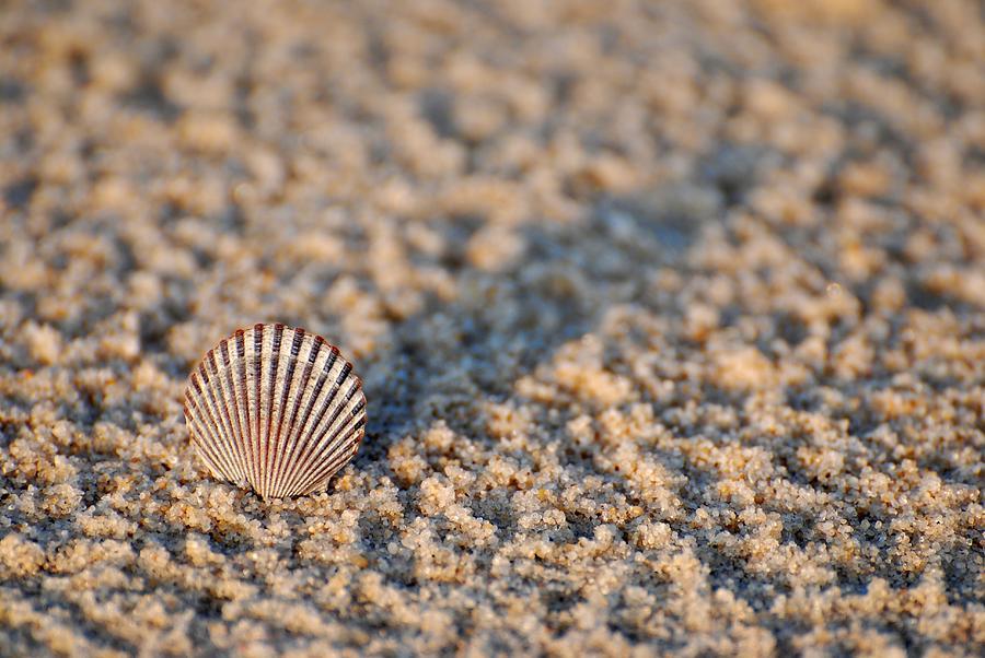 Seashell Photograph - Little Seashell - Jersey Shore by Angie Tirado