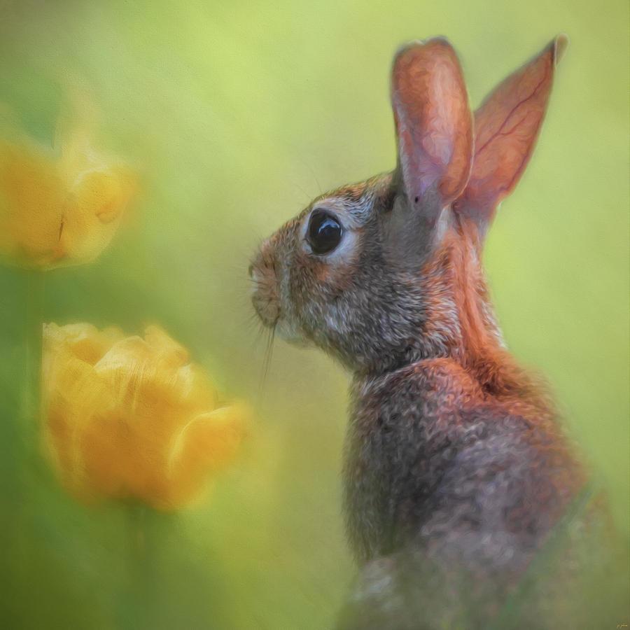 Jai Johnson Photograph - Little Spring Seeker by Jai Johnson
