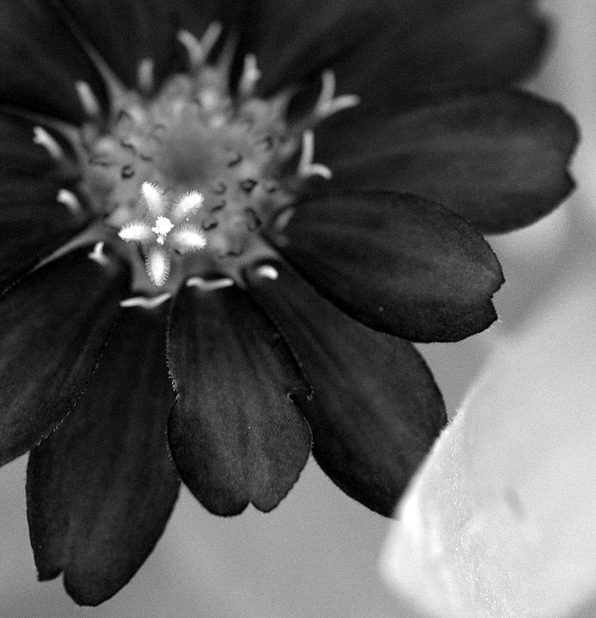 Little Sproutling by Christine Ricker Brandt