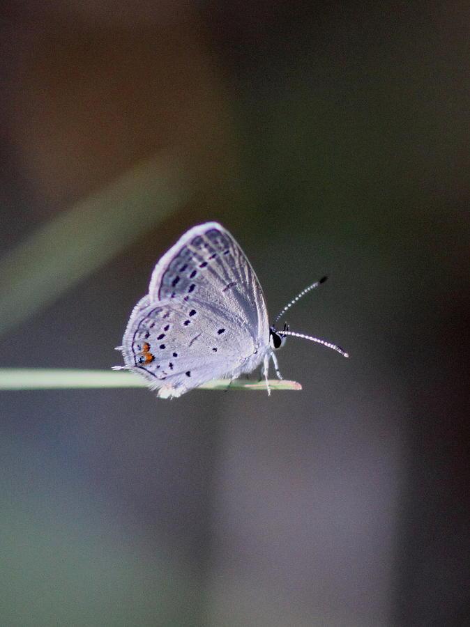 Butterfly teen