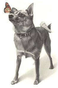 Chihuahua Drawing - Little Things Drawing by Brian Duey