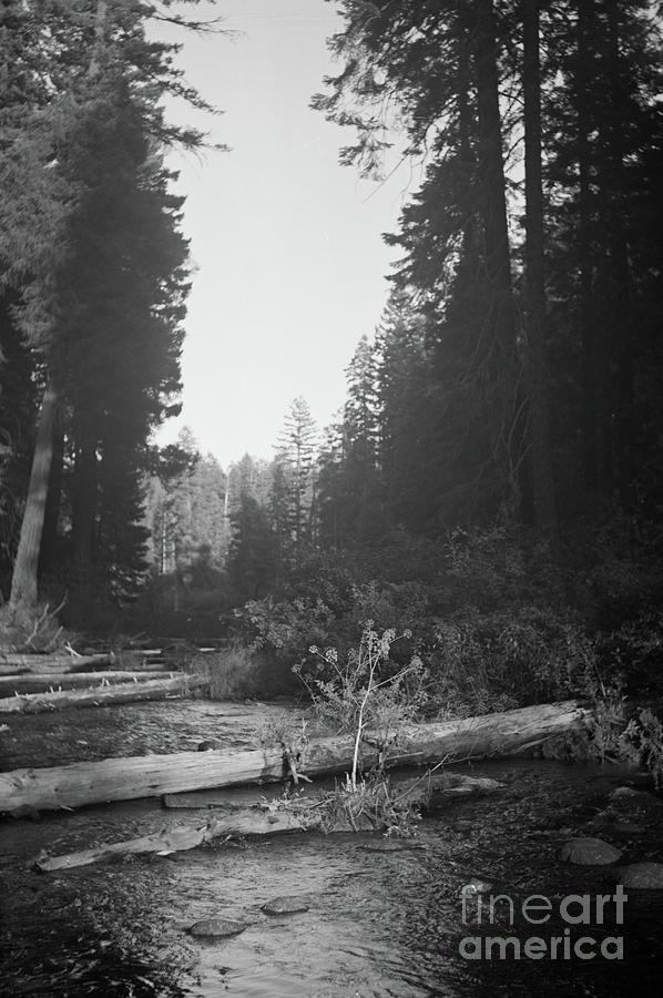 Landscape Photograph - Little Tree by Norman Dean