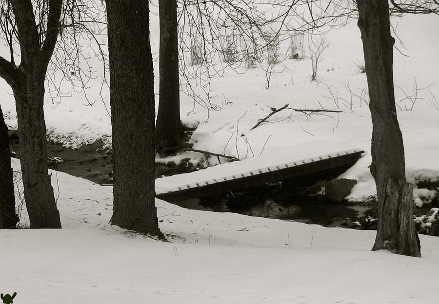 Winter Walk Photograph - Little Winter Crossing by Debra     Vatalaro