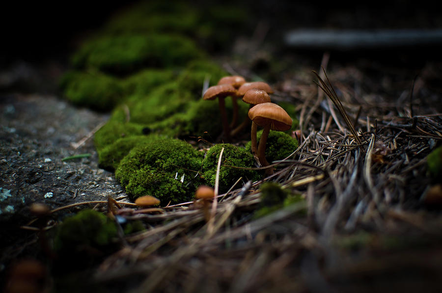 Mushroom Photograph - Little World by Swift Family