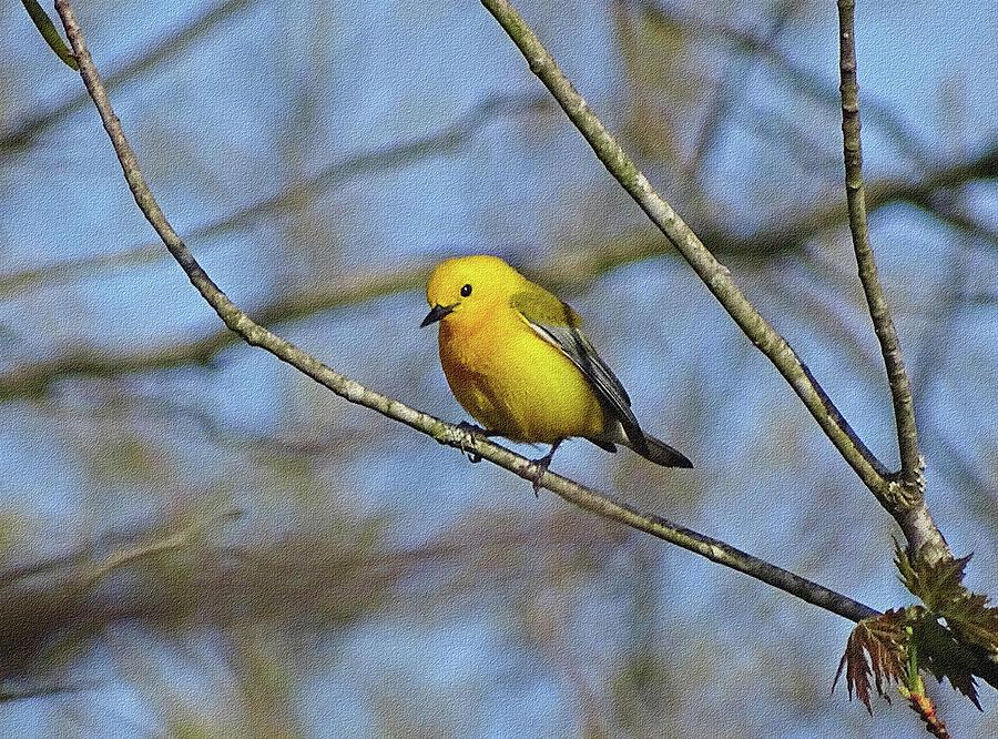 Little Yellow Bird by Sandy Keeton