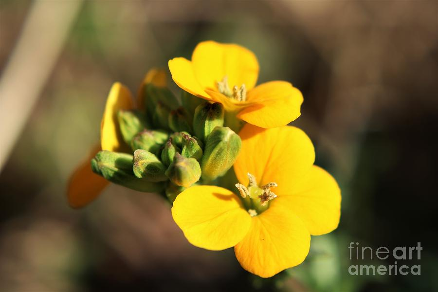Little yellow flowers photograph by dee winslow little photograph little yellow flowers by dee winslow mightylinksfo