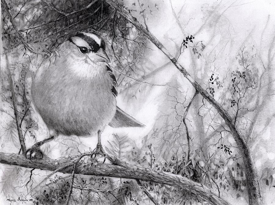 Sparrow Drawing - Littlest Sparrow by Terry Morris