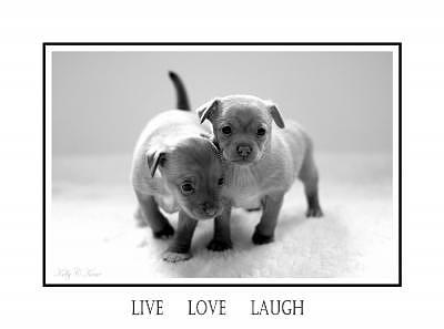 Puppy Photograph - Live Love Laugh by Kelly  Kane