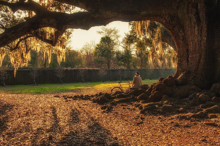Live Oak at Audubon Park by Thomas Lavoie