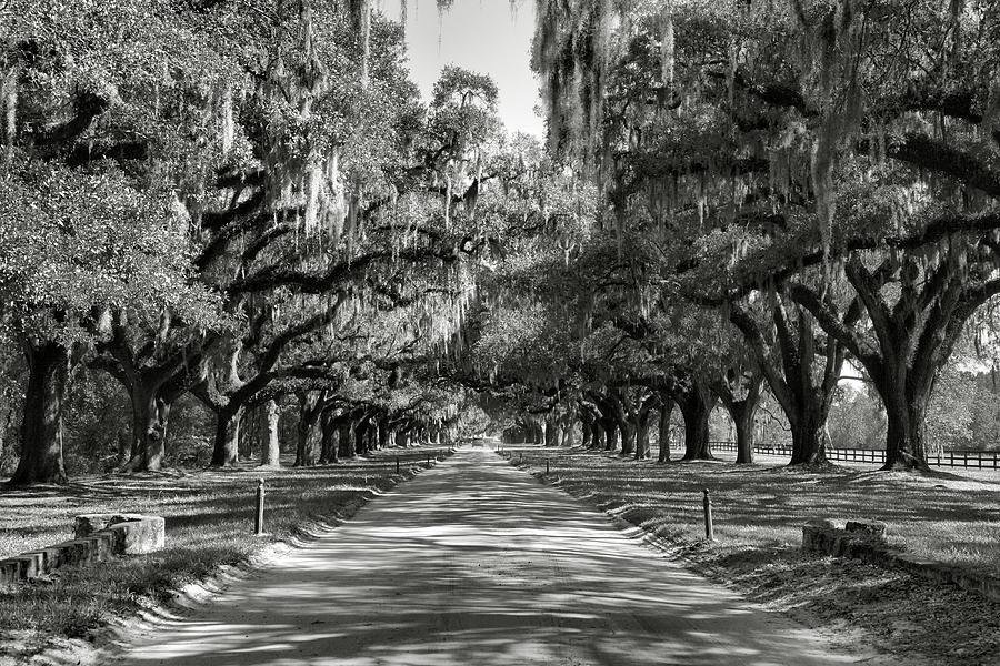 Oaks Photograph - Live Oak Avenue II by Steven Ainsworth
