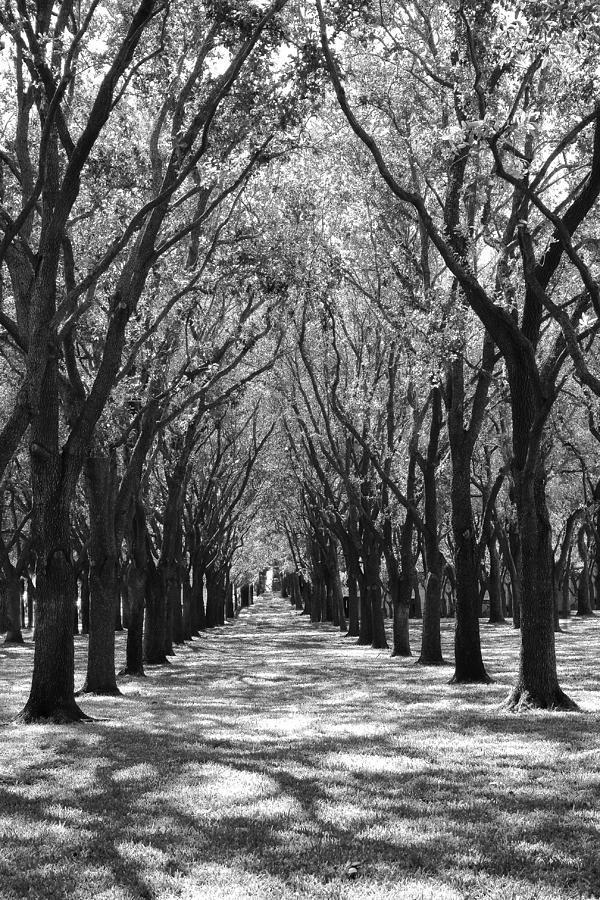 Live Oak Corridor by Angela Rath