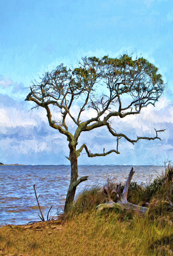 Live Oak on Winyah Bay by Sandra Anderson