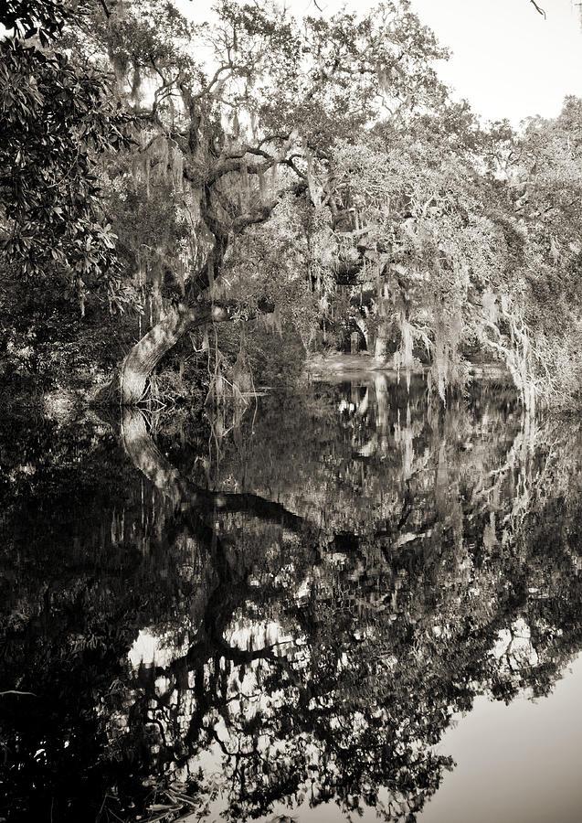 Live Oak Photograph - Live Oak Reflections by Dustin K Ryan