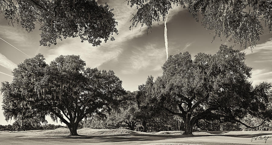 Beaufort County Photograph - Live Oaks by Phill Doherty