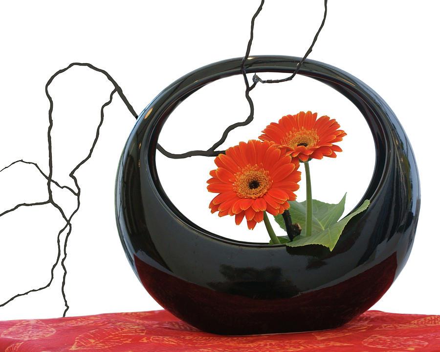 Living Flowers - Ikebana by Nikolyn McDonald