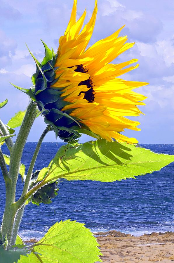 Sunflower Photograph - Living Is A Blessing..... by Tanya Tanski