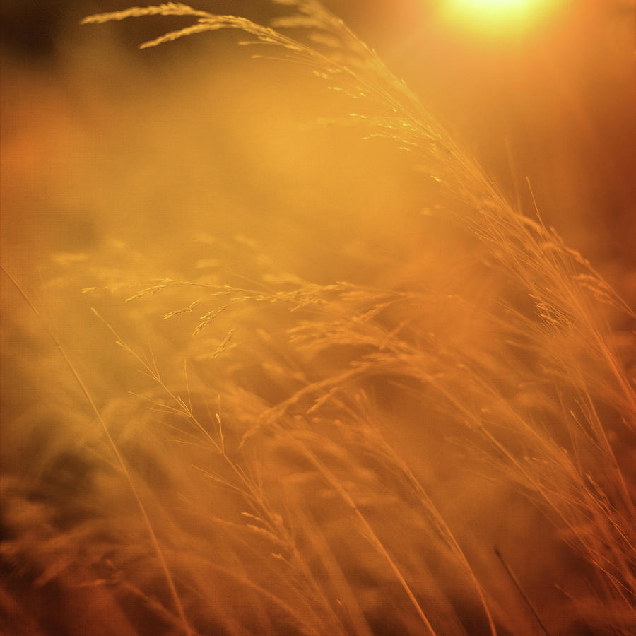 Grass Photograph - Living Out Of Touch by Zapista Zapista