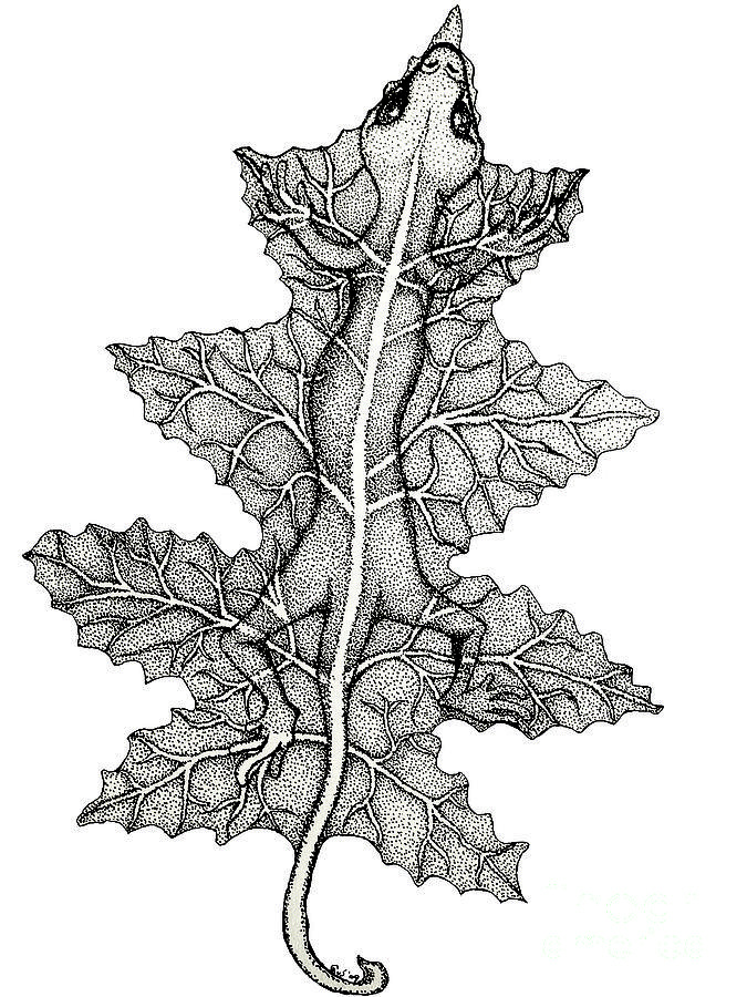 Lizard And Leaf Drawing by Nick Gustafson