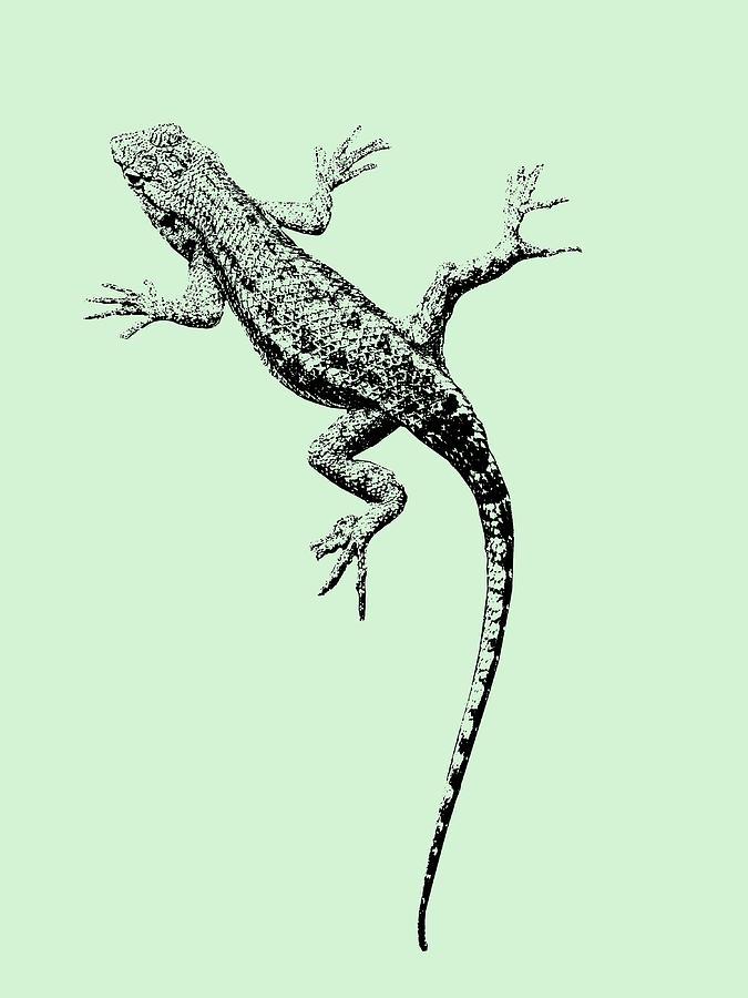 Lizard Photograph - Lizard In Sage Green by Colleen Cornelius