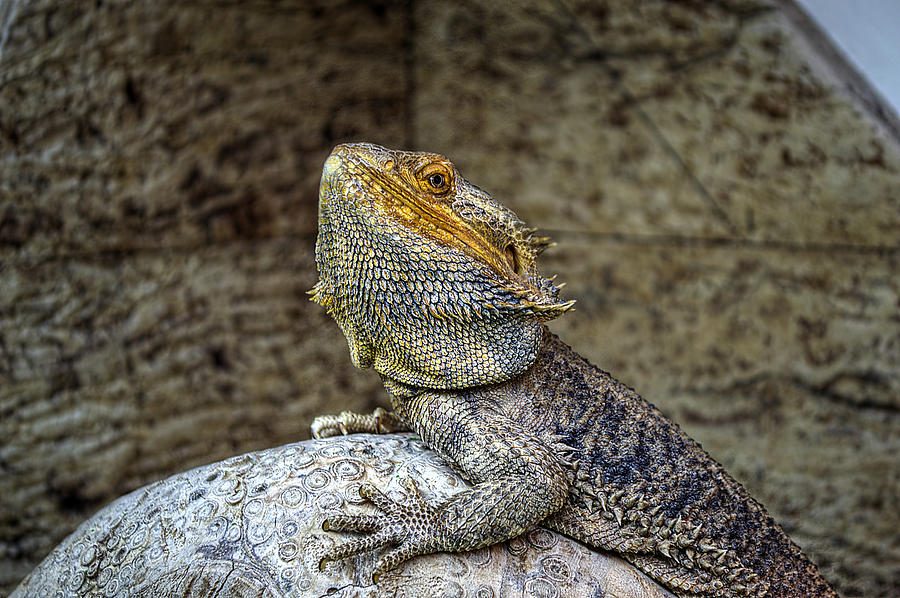 Lizard Photograph - Lizard by Mark Hunter