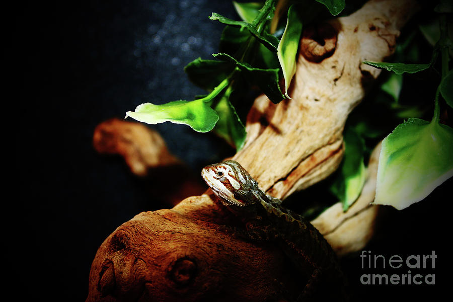 Lizard On A Log Photograph