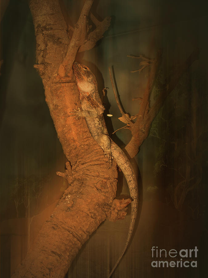 Lizard on a Tree Trunk by Elaine Teague