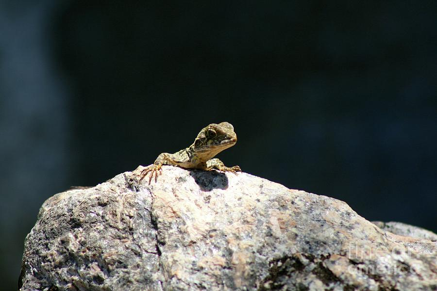 Lizzard Photograph - Lizard Rock by Gregory E Dean