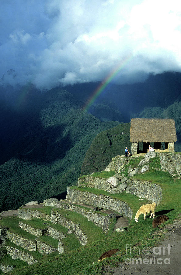 Machu Picchu Photograph - Llama And Rainbow At Machu Picchu by James Brunker