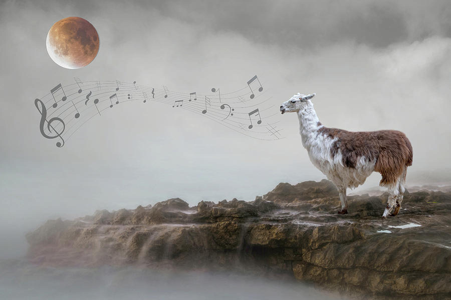 Llama Singing to the Moon by Rebecca Cozart