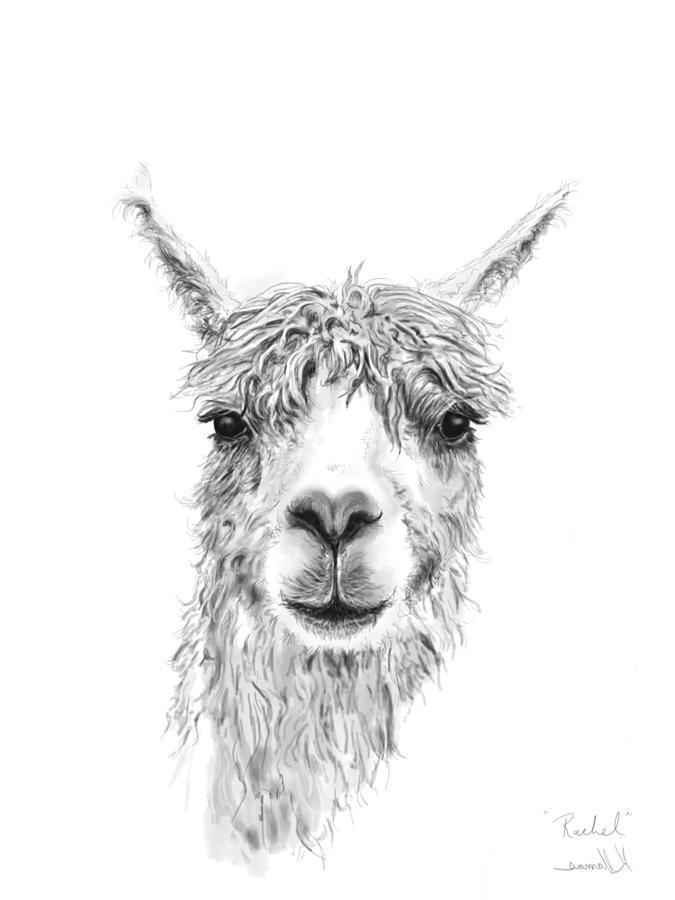 Llamas Drawing - Rachel by K Llamas