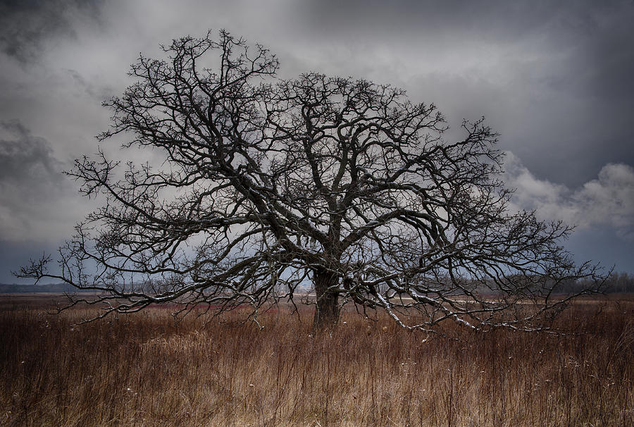 Loan Oak II by Dan Hefle