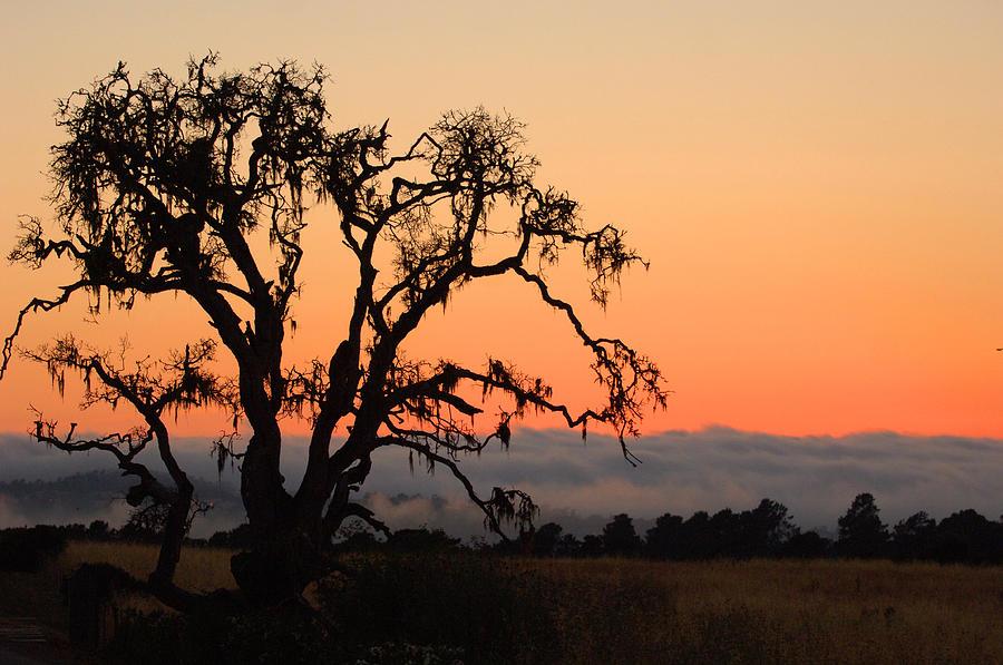 Loan Tree Overlooking Fog Photograph by Jill Reger