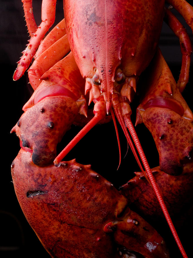 Italy Photograph - Lobster by Jim DeLillo