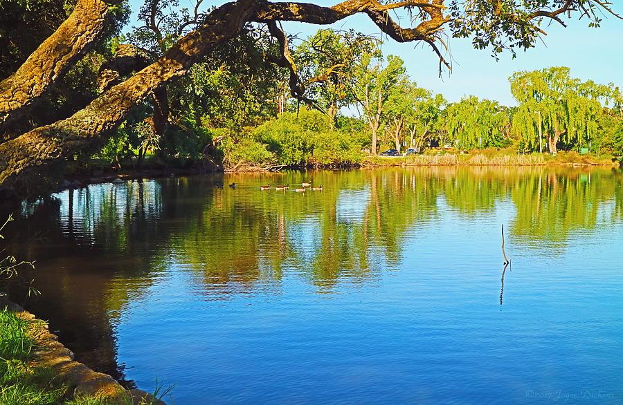 Lodi Photograph - Lodi Lake Morning Shadows And Reflections by Joyce Dickens