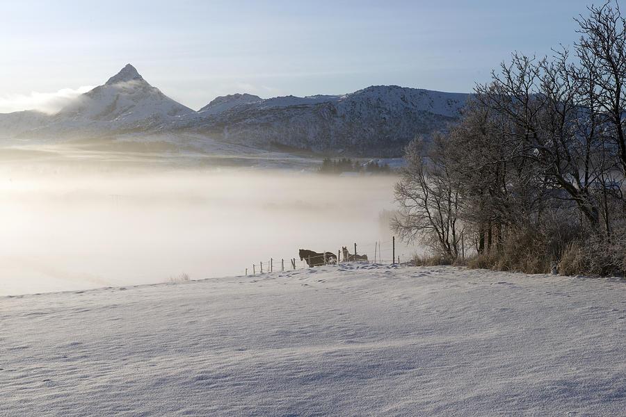 Lofoten, Nordland 1 Photograph