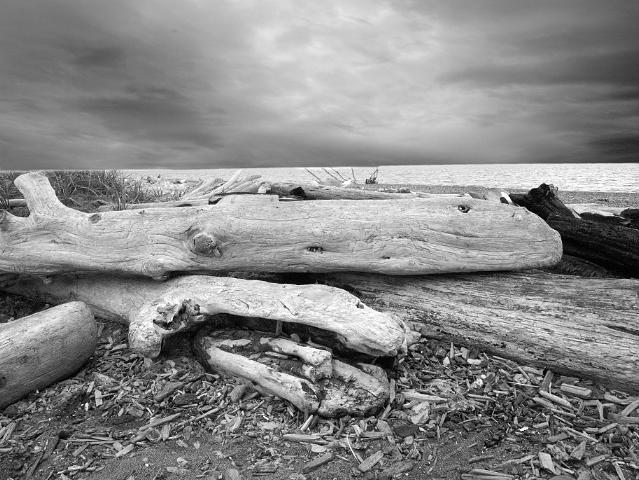 Landscape Photograph - Log Whale 2 by Paul Aiello